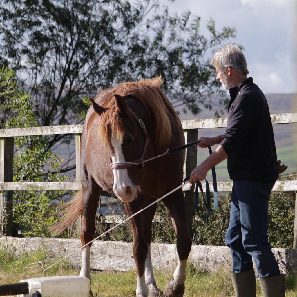 Tellington TTouch Training groundwork workshop with The Posture Clinic