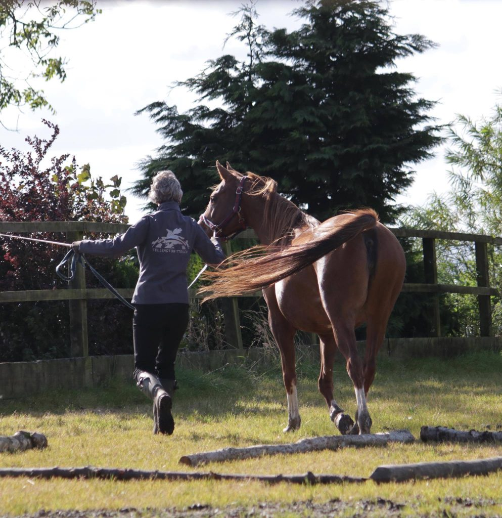 Tellington TTouch Training for Horses leading work Erica Donnison of The Posture Clinic
